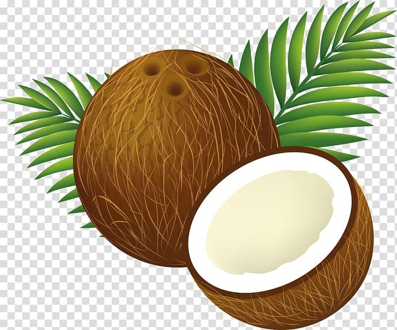 Shell illustration water milk. Coconut clipart coconut husk