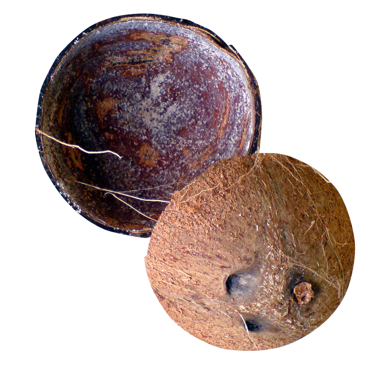 Png images pngpix shell. Coconut clipart coconut husk