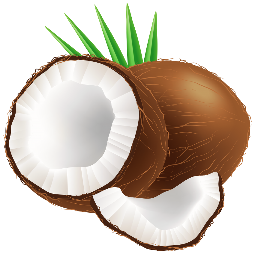 Png free images toppng. Coconut clipart coconut husk