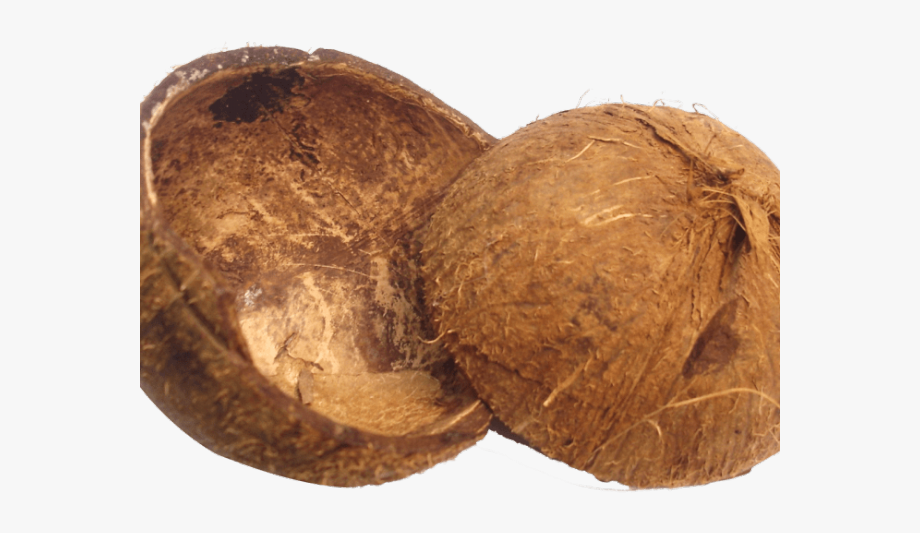 Coconut clipart coconut husk. Shell and