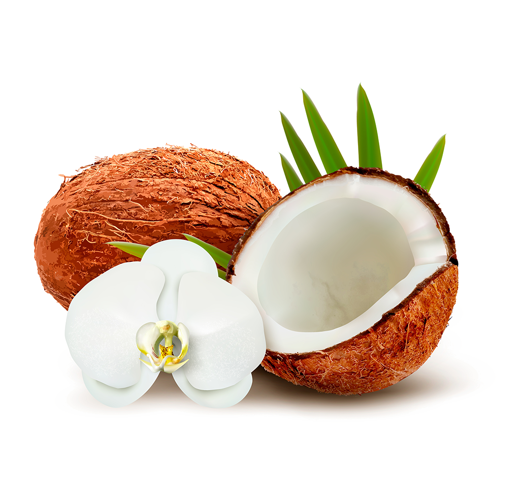 Coconut clipart coconut milk. Water clip art transprent
