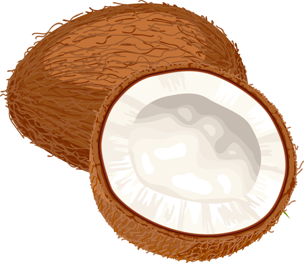 Shell clipart pixel. Coconut png images free