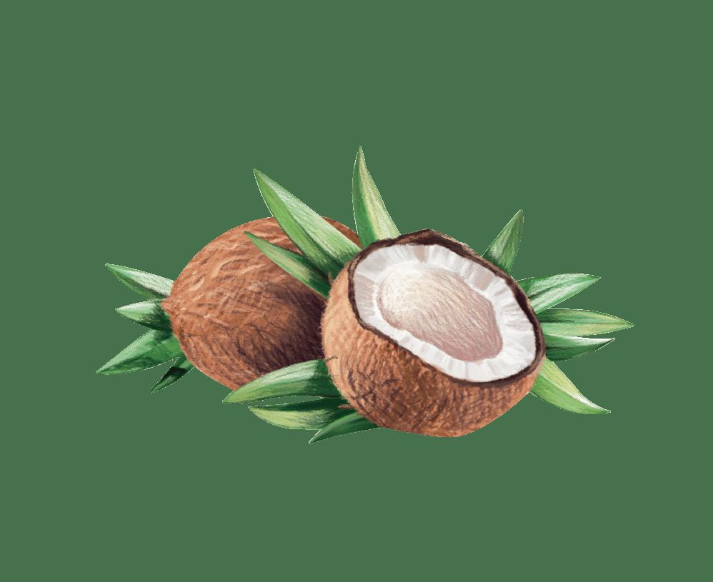 Organic virgin oil artisan. Coconut clipart fresh