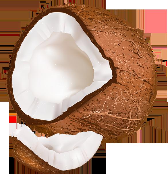 Coconut clipart fresh. Tubes fruits l gumes