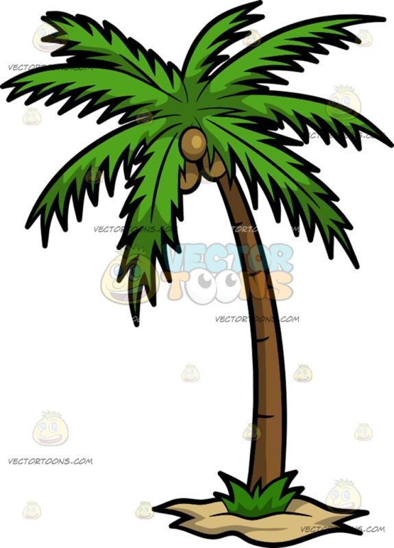 Coconut clipart i m. A palm tree with