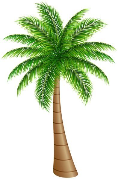 Pin by sherrie wilson. Coconut clipart i m