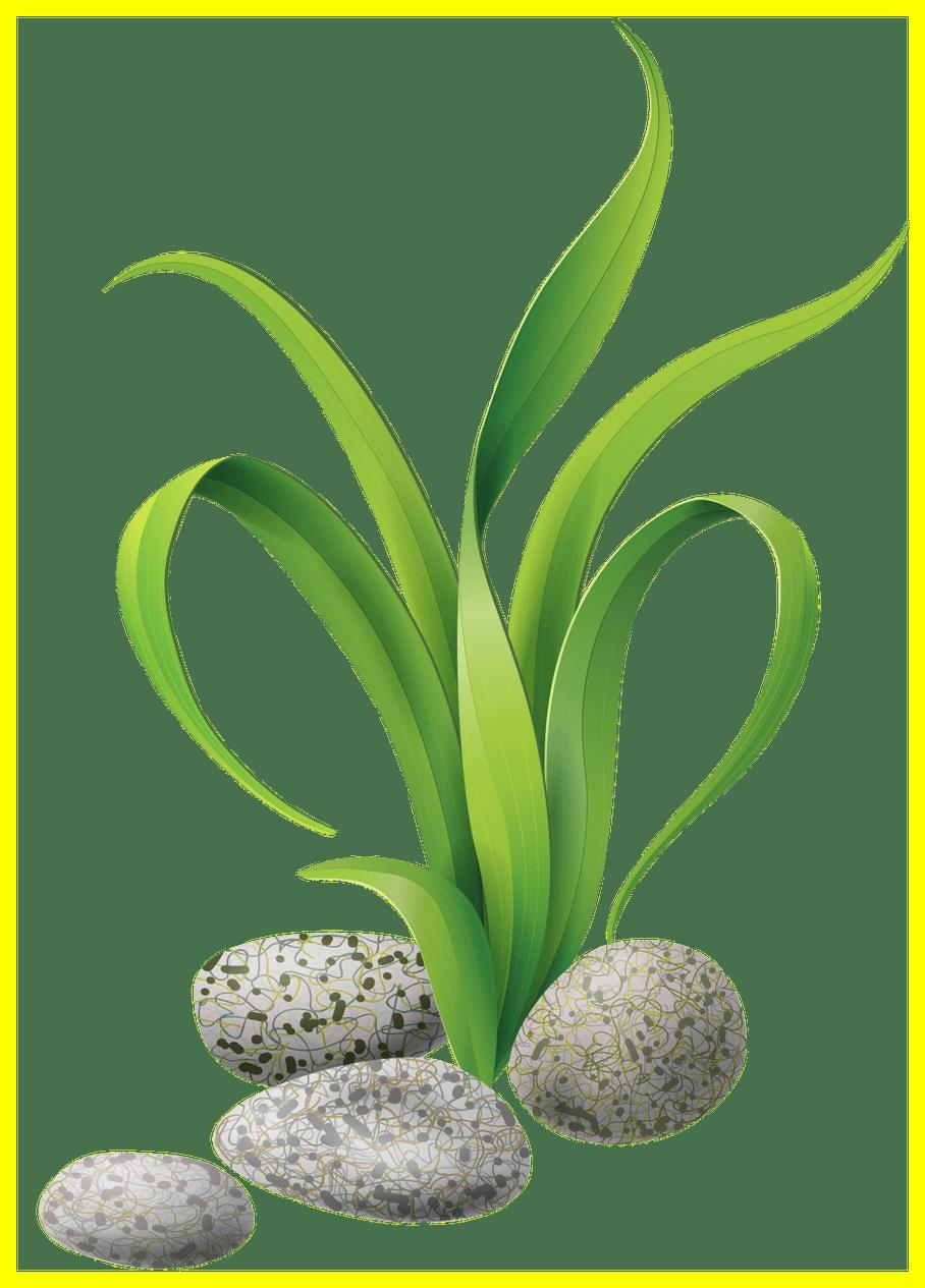 The best algae stones. Coconut clipart kawaii