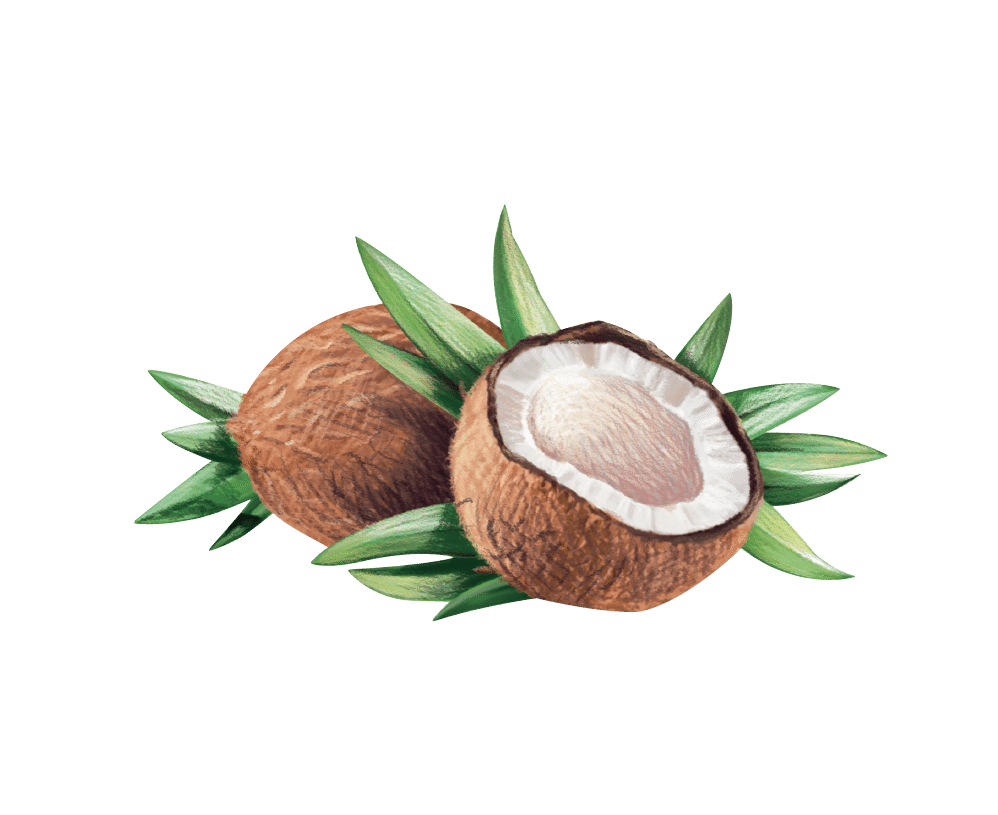 Vco zoe healthy lifestyle. Seedling clipart coconut seed