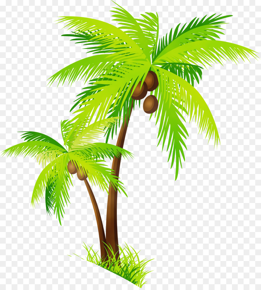 Arecaceae clip art palm. Coconut clipart large