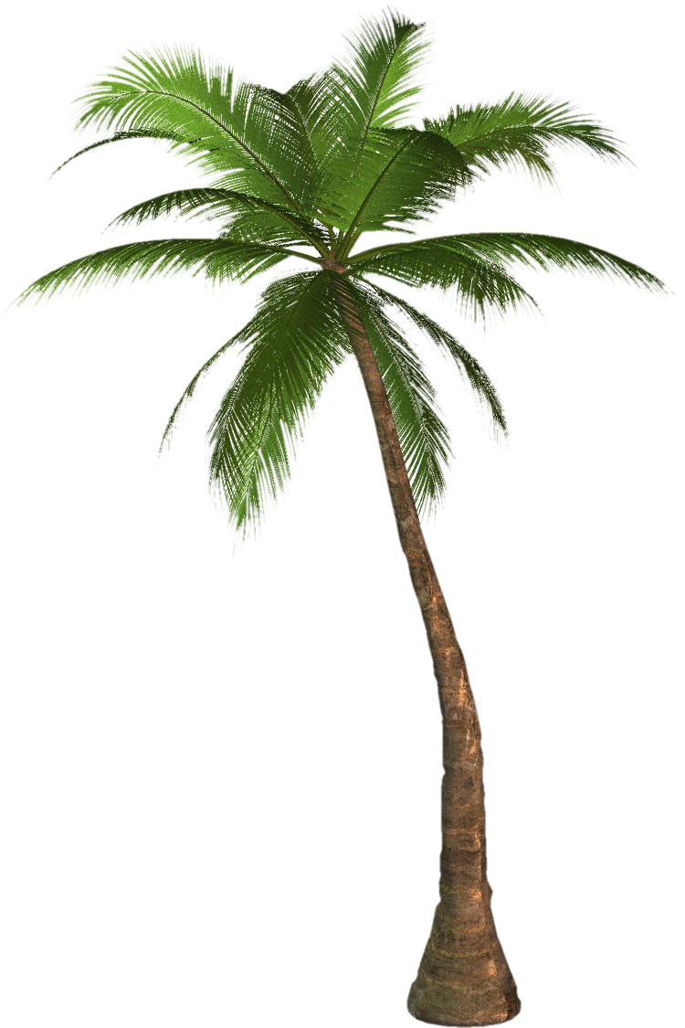 Coconut clipart large. Arecaceae desktop wallpaper tree