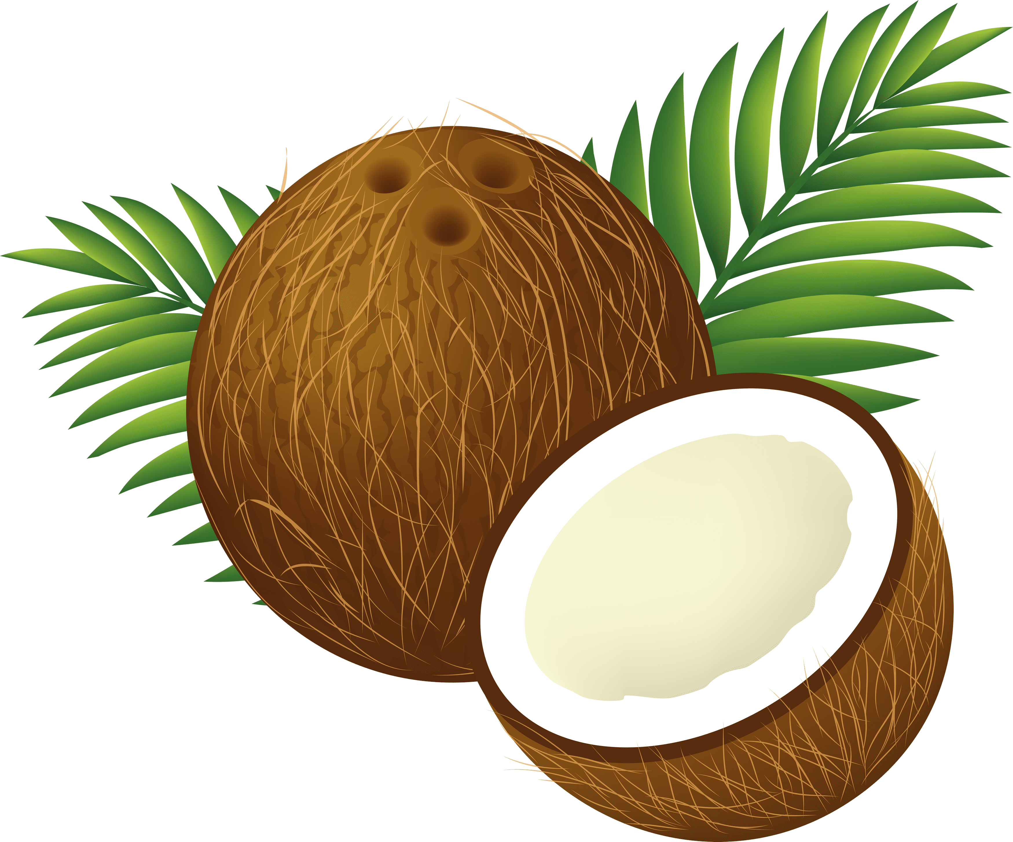 Coconut clipart large. Coconuts png free images