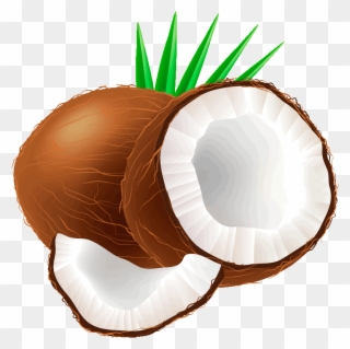 Free png clip art. Coconut clipart large