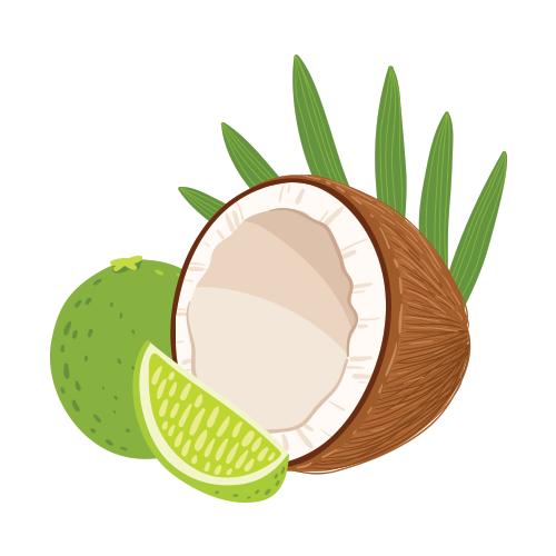 Fragrances inner sparkle . Coconut clipart lime