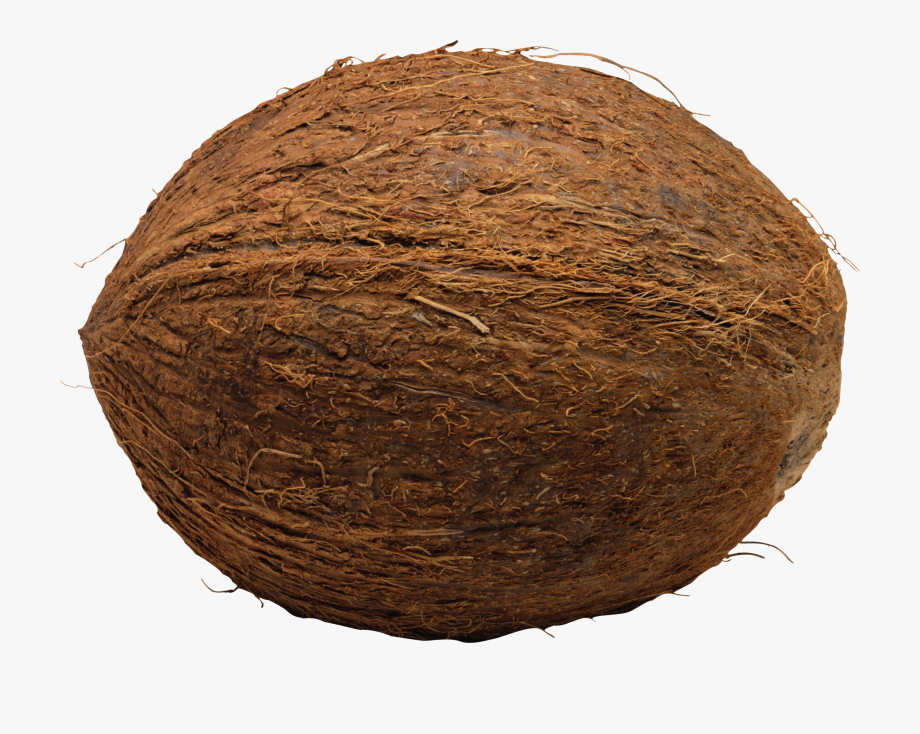 Coconut clipart printable. Coconuts whole png free