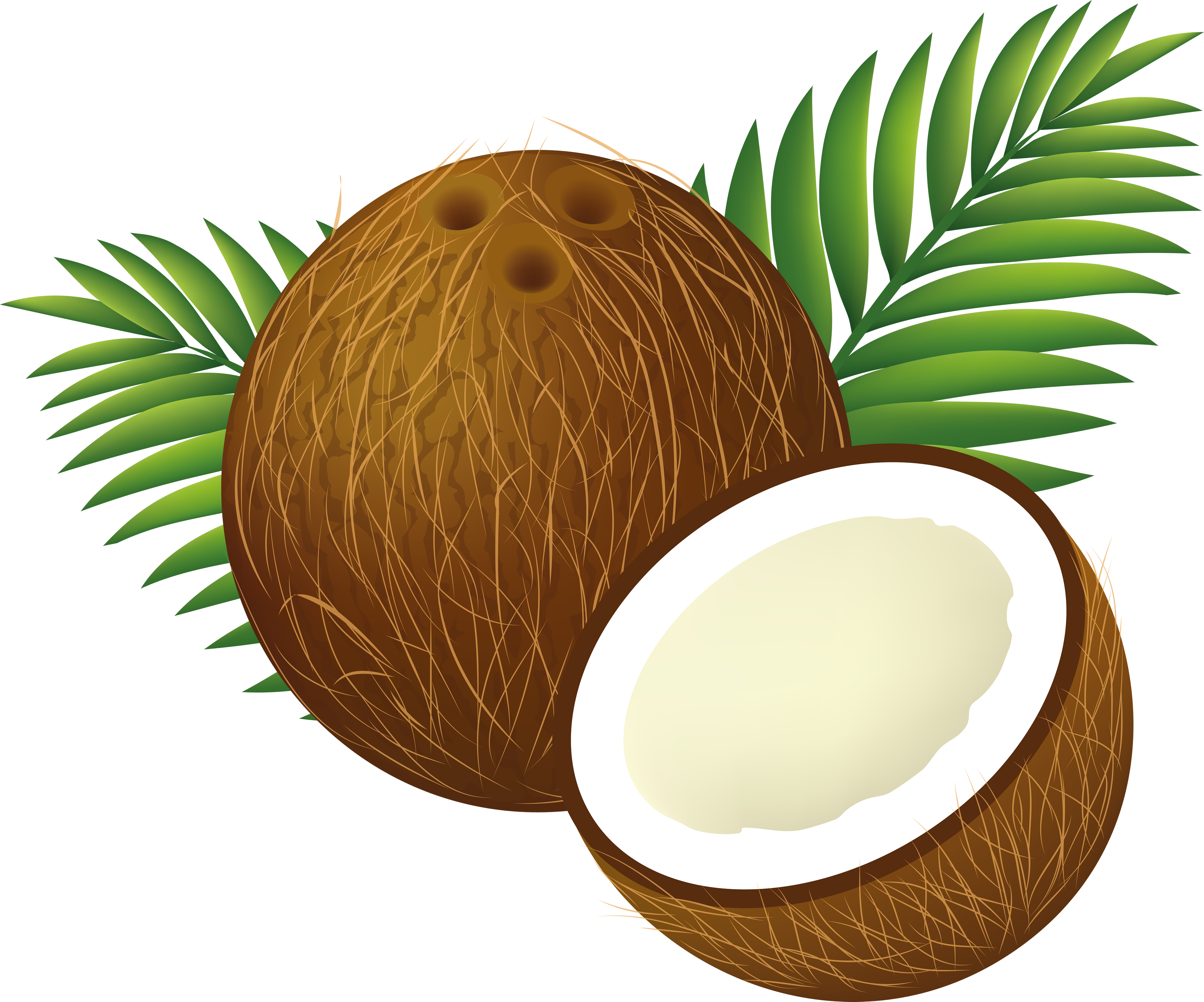 Coconut clipart printable. To print free images