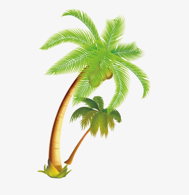 Coconut clipart tropical coconut. Tree vector material