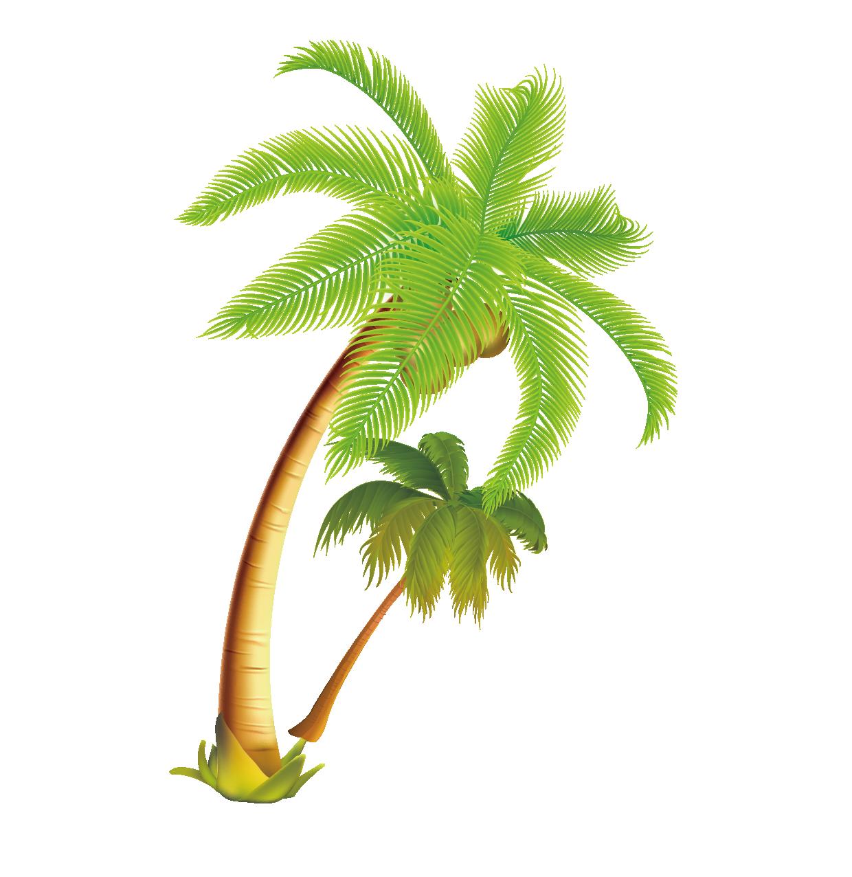 Coconut clipart tropical coconut. Arecaceae tree vector material