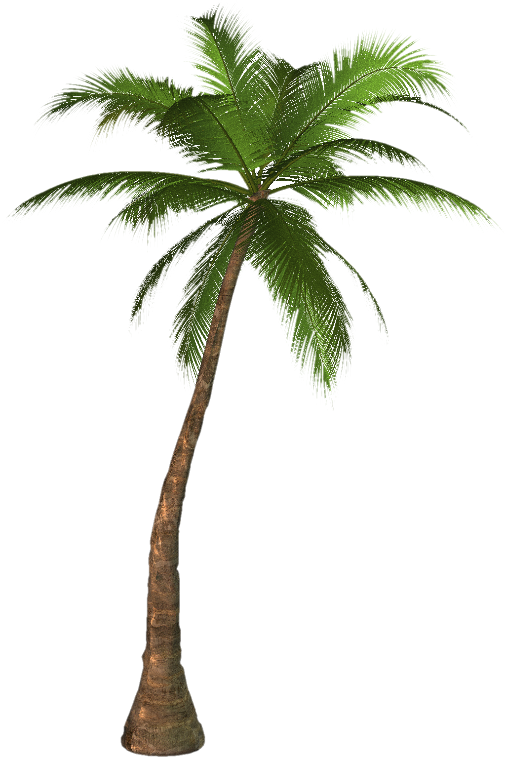 Coconut clipart tumblr transparent. Palm tree drawing png