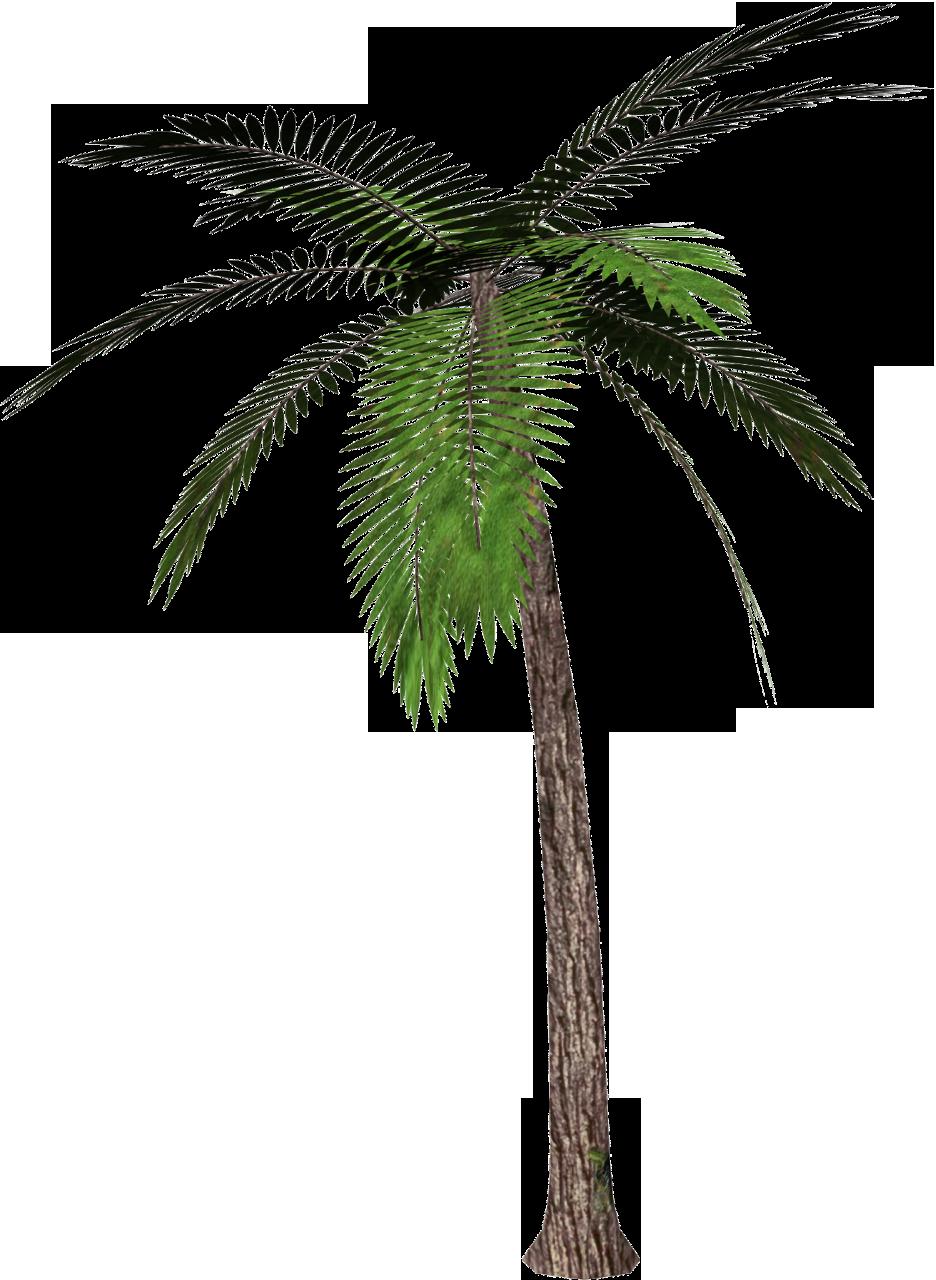 coconut clipart tumblr transparent