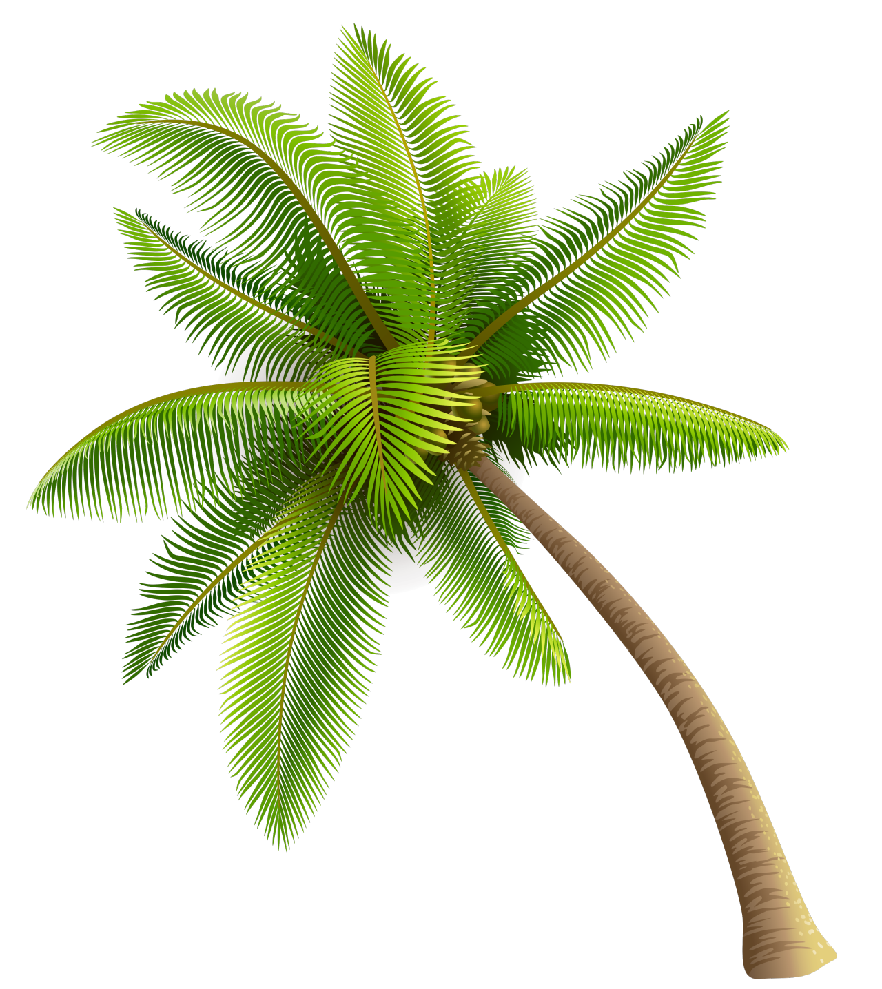 Palm tree amazing wallpapers. Coconut clipart tumblr transparent