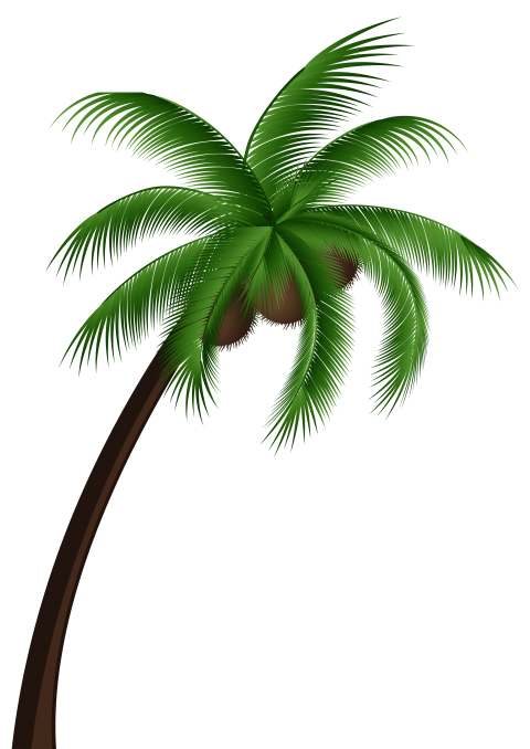 Palm png free images. Coconut clipart two tree