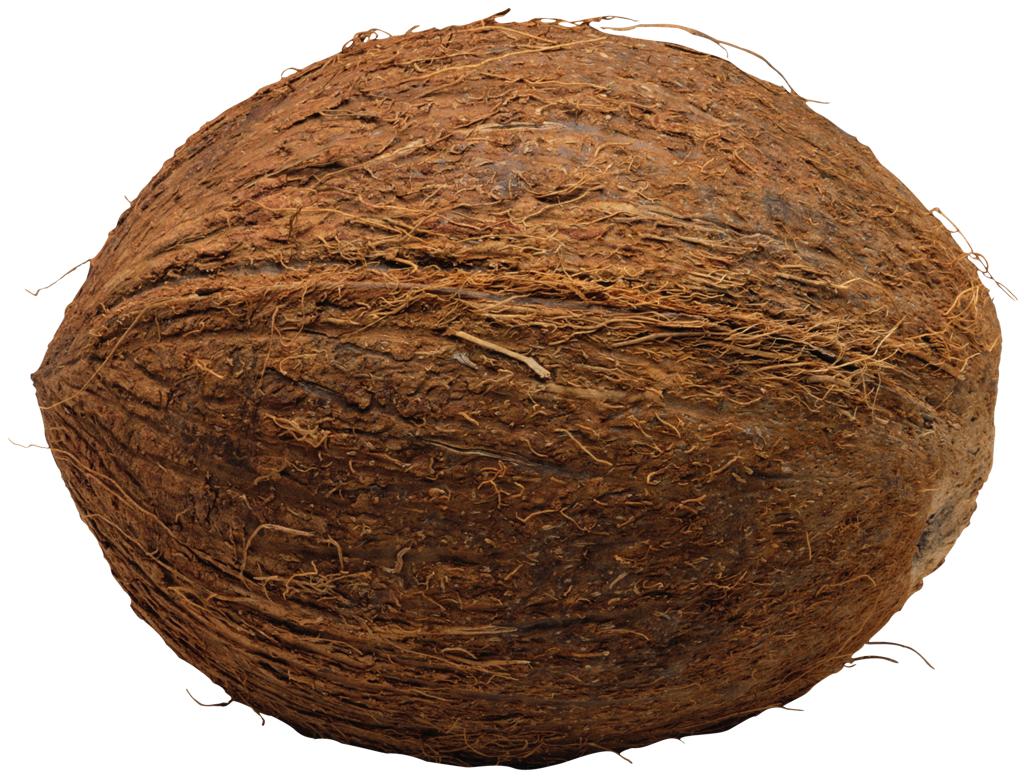Coconut clipart whole. Png transparent free images
