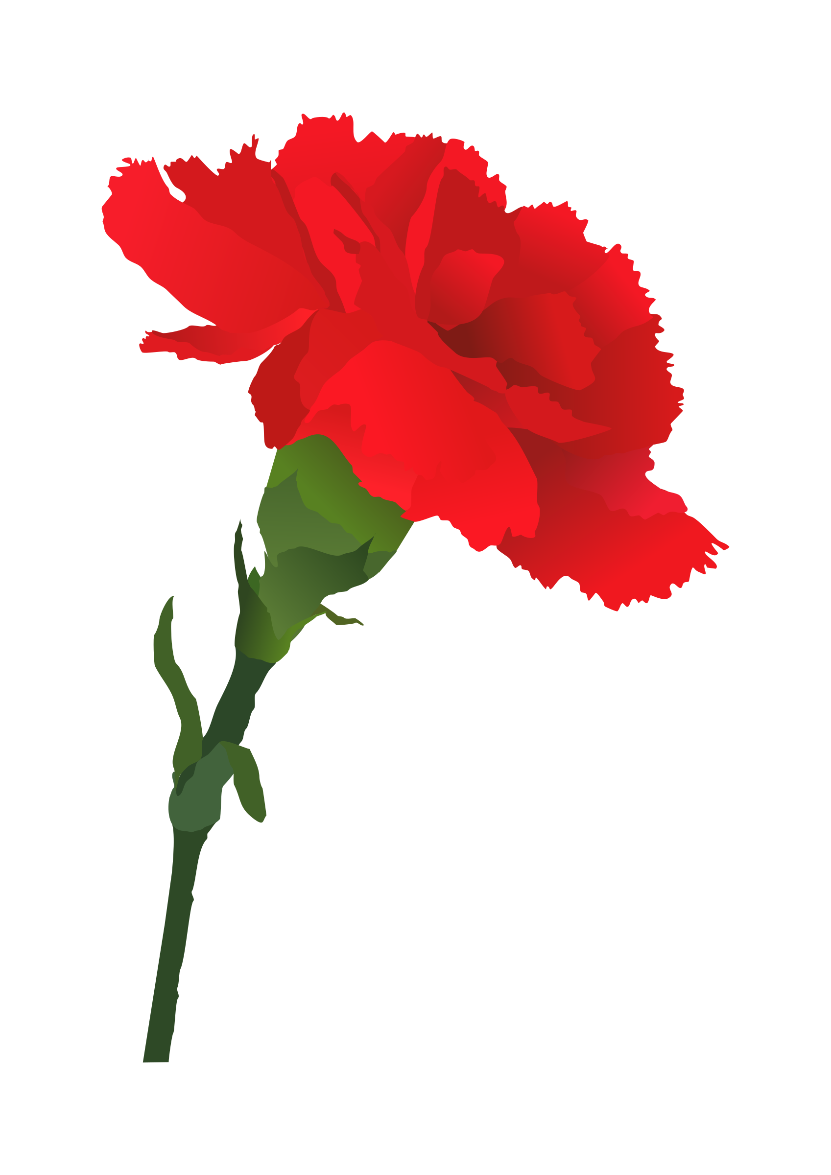 Coffin clipart flower drawing. Red carnation displaying images