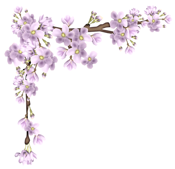 Floral clipart branch. Pink spring png picture