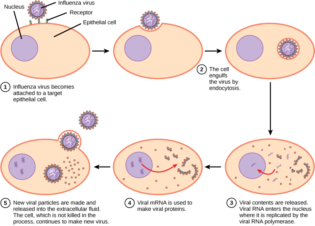 Flu clipart bacteria.  viruses concepts of