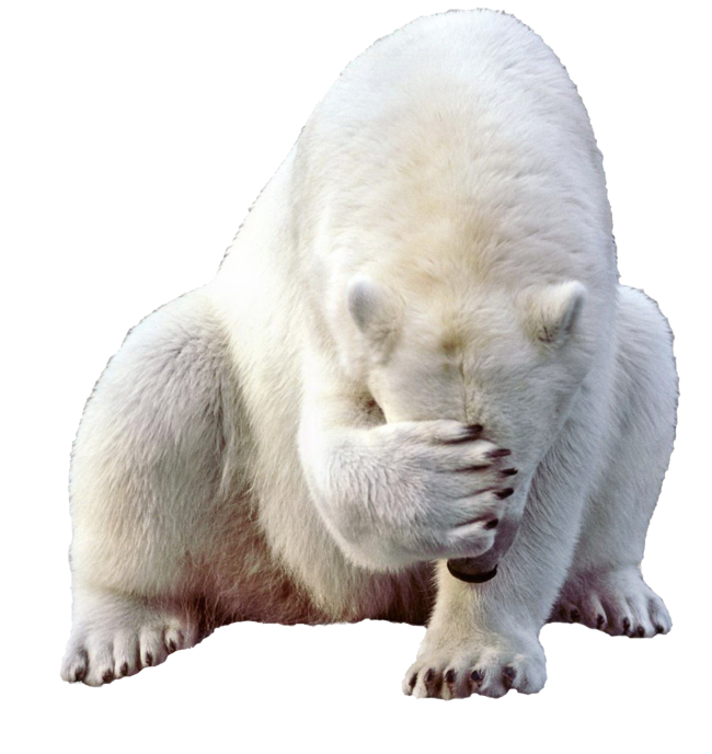 Ice clipart polar bear. Png images free download