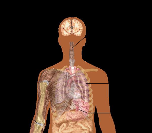 Wikiwand symptoms of with. Flu clipart influenza symptom