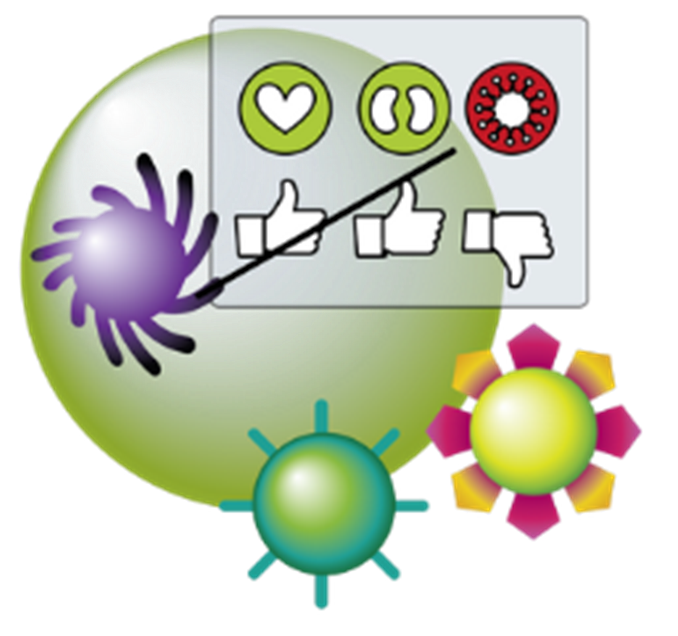 How does the immune. Shot clipart immunity