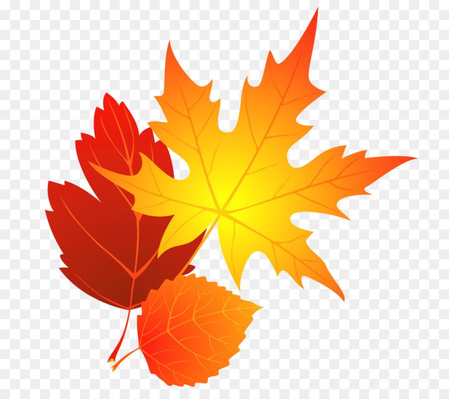 Colors clipart autumn. Maple leaf tree transparent