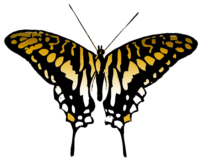 Butterfly multicolored image colored. Colors clipart brown