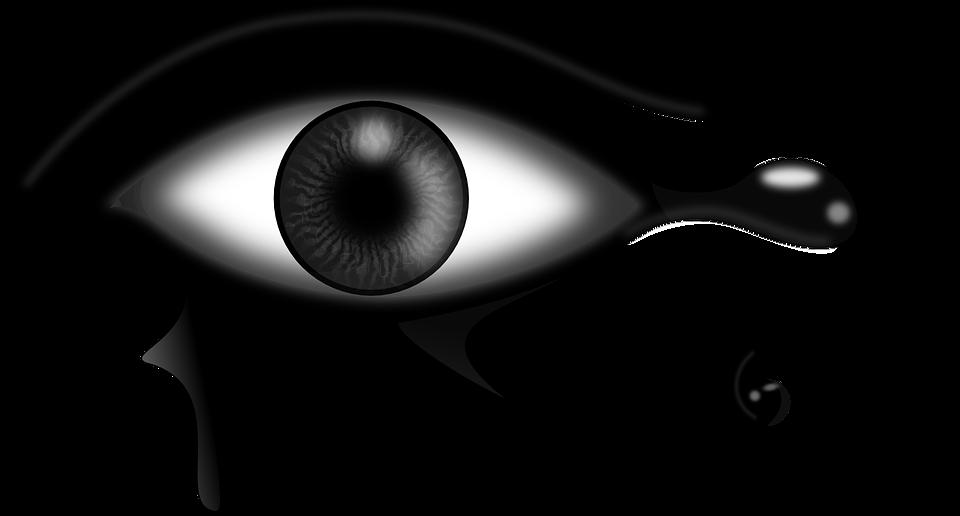 Cougar clipart eye. Color cliparts shop of