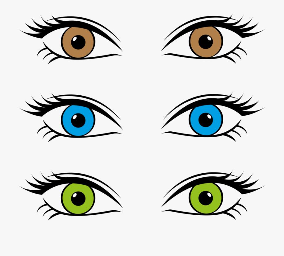 Eyeball clipart colorful eye. Color retina iris brown