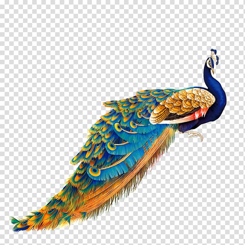 Peacock clipart gold peacock. Blue and brown bird