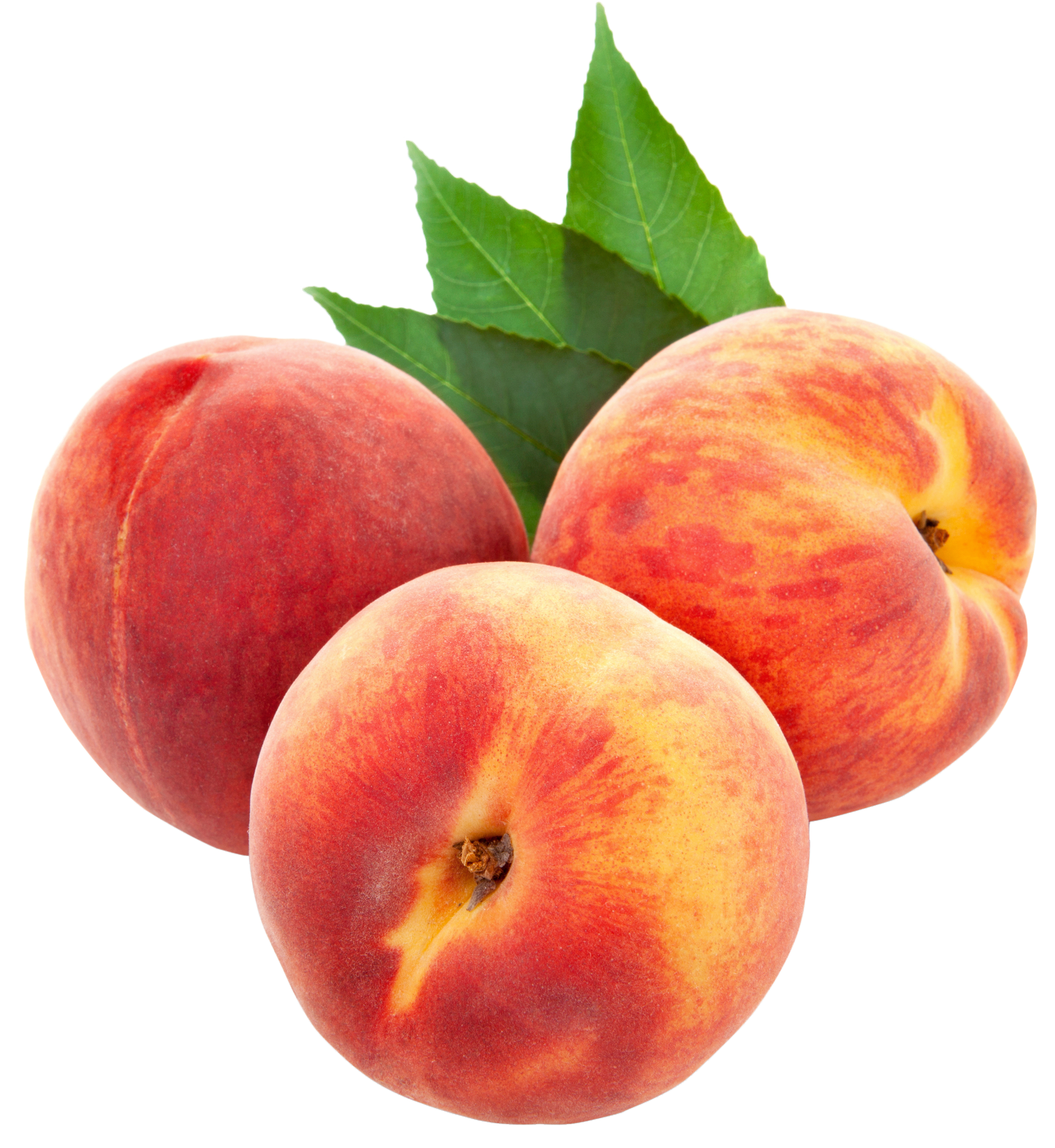 Color clipart peach. Large png peaches crazy