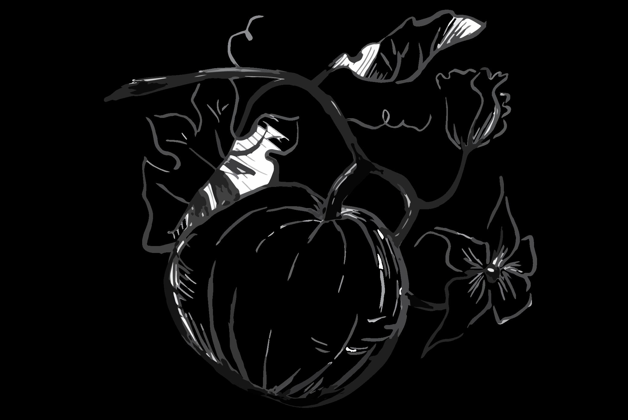 Pumpkin clipart sketch. Seed drawing at getdrawings