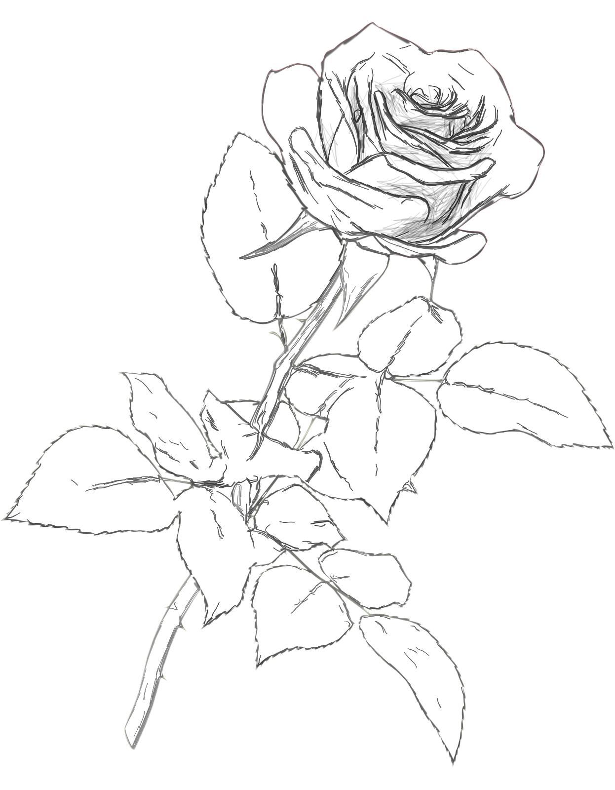 Charcoal drawing at getdrawings. Color clipart rose