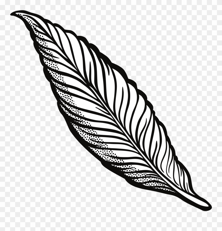 Feathers clipart outline. Turkey feather transparent download