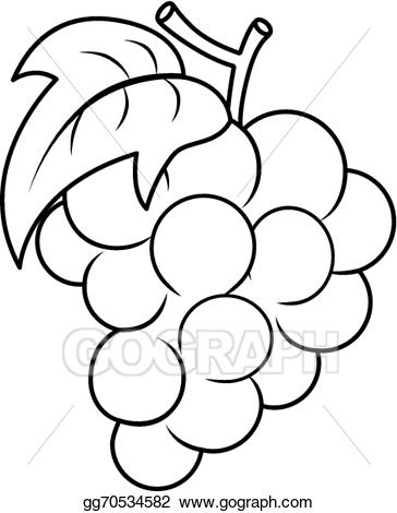 Vector art grape coloring. Grapes clipart outline