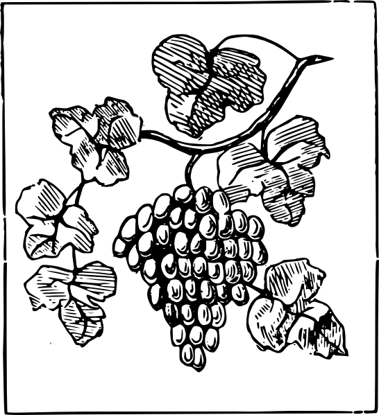 Grape clipart drawing. Grapes clip art at
