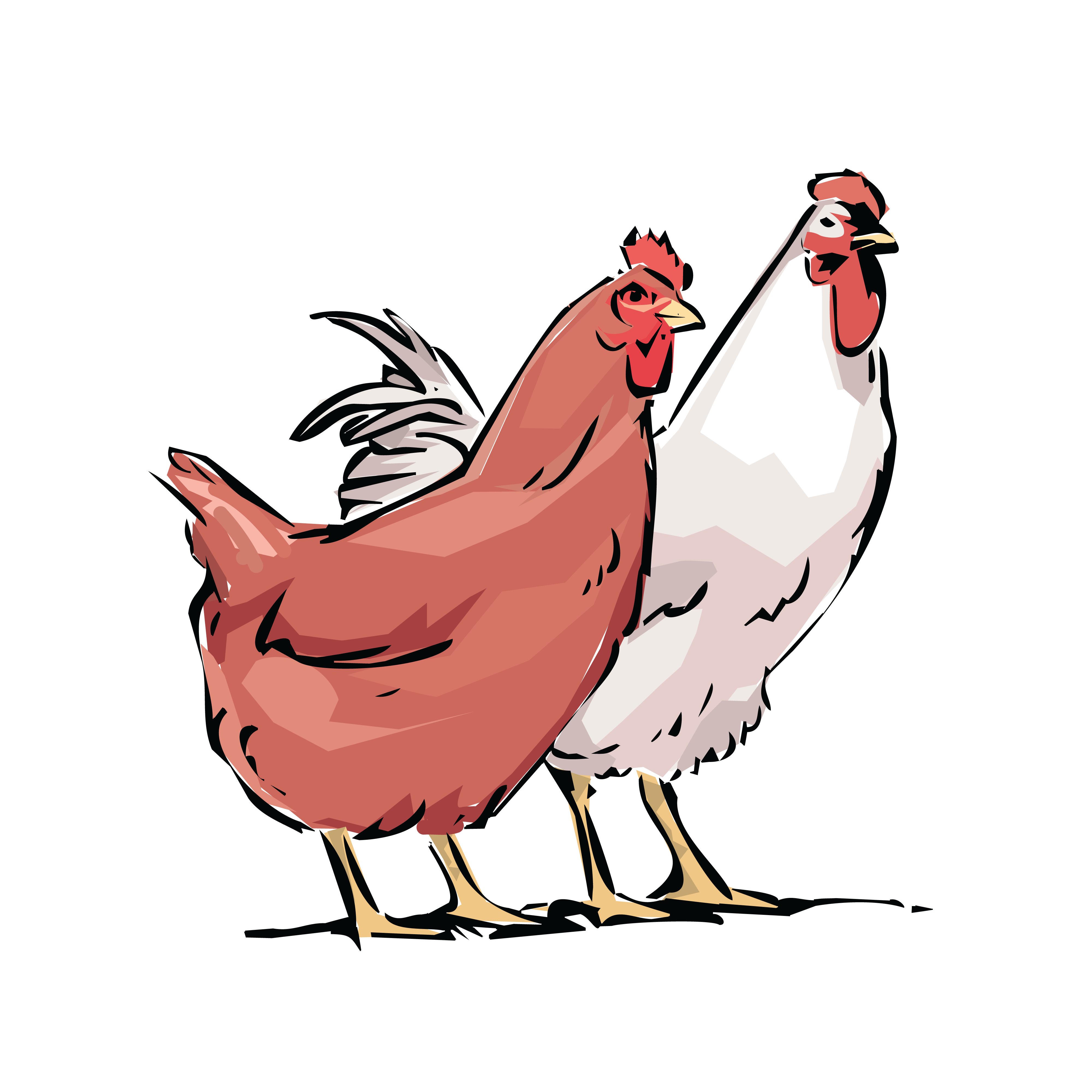 Hen clipart orange chicken. Rooster introducing free of