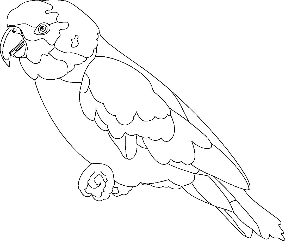 Sketch drawing at getdrawings. Parrot clipart colour