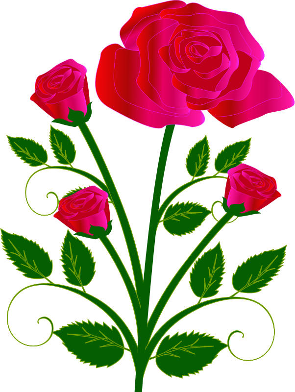 Coloring clipart rose. Pink colorful free on