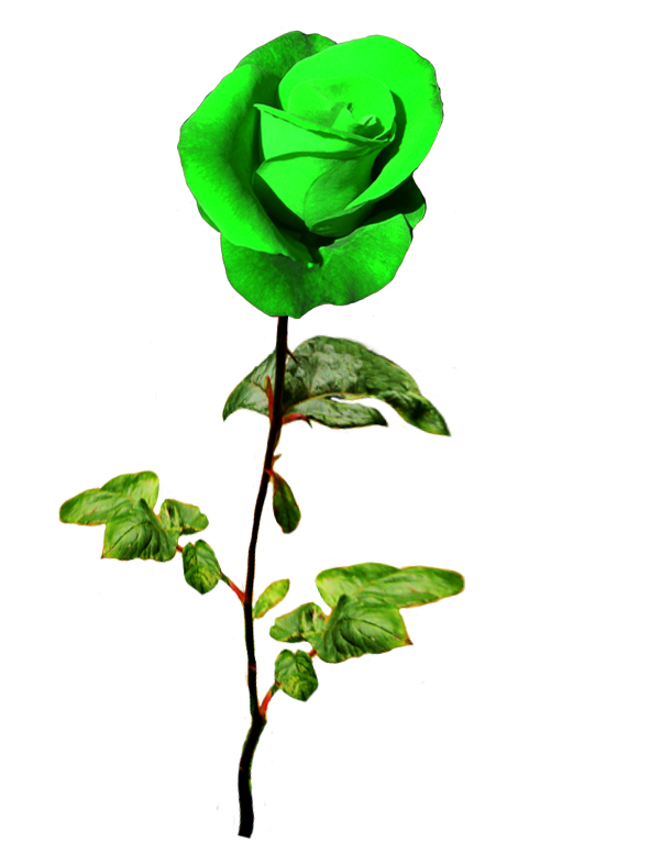 Coloring clipart st patricks day. Patrick s green rose
