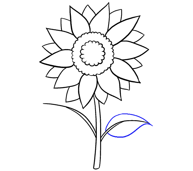 Coloring clipart sunflower. How to draw a
