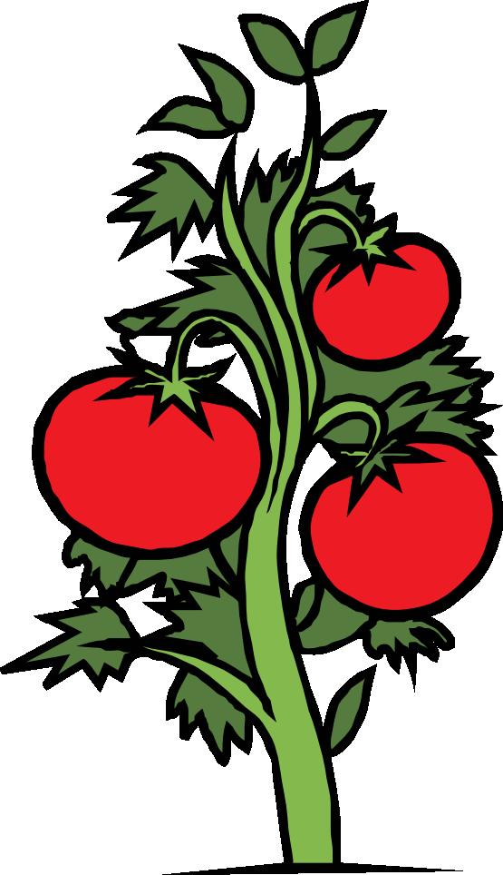 Plant book panda free. Coloring clipart tomato