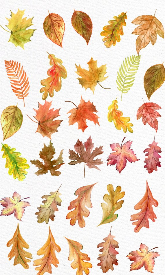Leaves clipart illustration. Watercolor autumn